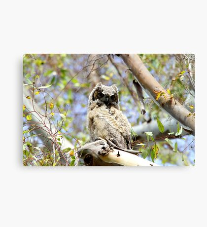 Owl Up High in a Tree Canvas Print