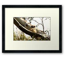 Cute Furry Baby Owl Framed Print