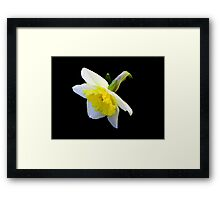 Spring has sprung!!! © Framed Print