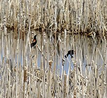 Marsh Life by Tracy Faught