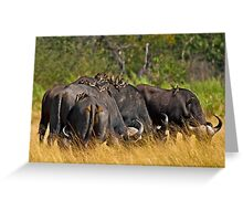 Oxpeckers' gathering Greeting Card
