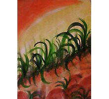 Reeds and weeds growing on a slope, watercolor Photographic Print
