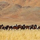 Wild horses I by Andy-Kim Mller