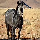 Wild horses of the tiras mountains II by Andy-Kim Möller