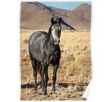 Wild horses of the tiras mountains II Poster