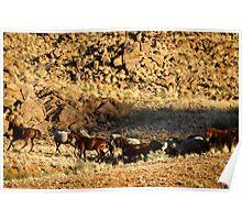Wild horses of the tiras mountains IV Poster