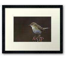 Willow Warbler Framed Print