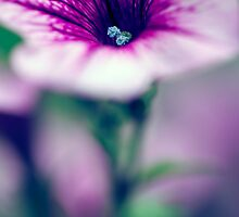 Petite Petunia by Natalie Parker