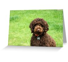 Ozzy - Labradoodle Greeting Card