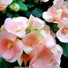Floral delights by Nancy Richard