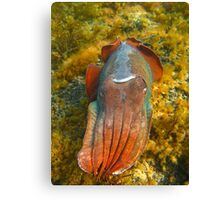 Giant Cuttlefish Blushing Canvas Print