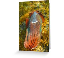 Giant Cuttlefish Blushing Greeting Card