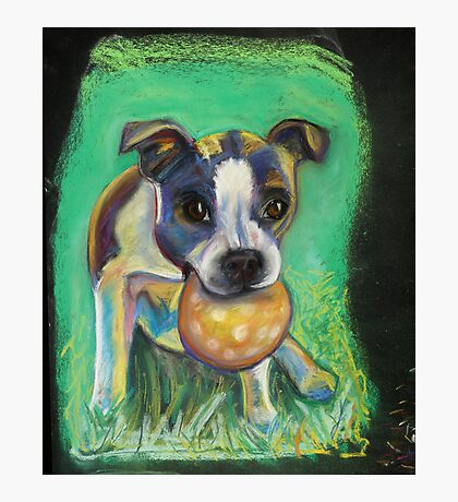 Boston Terrier with Ball Photographic Print