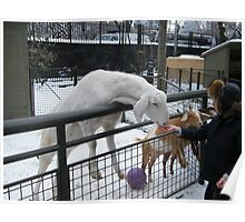 Childrens Zoo, Central Park, Snow View  Poster