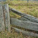 Old Sheep Yards , Morongla , NSW by Redviolin