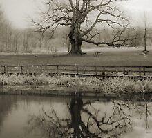 Reflecting by Nina Cazille