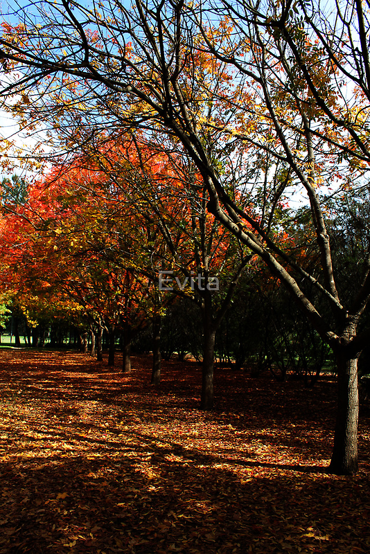 Autumn In Picton #2 by Evita