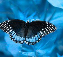 Blue on Blue by Brenda Burnett