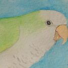 Quaker (Monk) Parakeet by Joann Barrack
