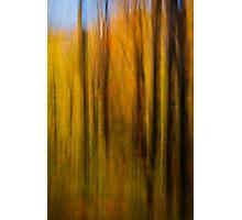 Autumn Treasure 3 Photographic Print