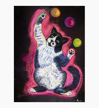 Juggling Cat Photographic Print