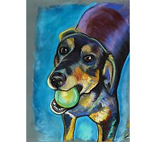 Heinz 57 Black and Tan Dog Photographic Print