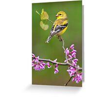 American Goldfinch on Redbud Greeting Card