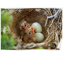 Hungry Hungry Finches Poster