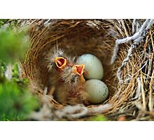 Hungry Hungry Finches Photographic Print
