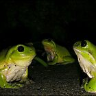 3 green frogs by Helenvandy