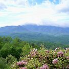 The Beautiful Smokies by Laurie Perry