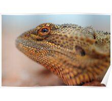 dragon eye Poster