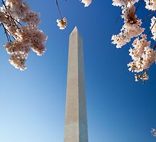 Springtime at Washington Monument by Inge Johnsson