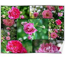 Wild Rose Collage - Small Beauties Poster