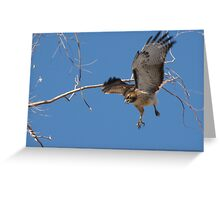 Red-tailed Hawk ~ Tactical Measures Greeting Card