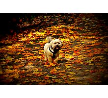 Shades of Autumn Photographic Print
