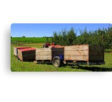 the apple harvest Canvas Print