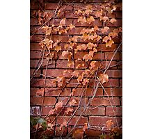 Fall Leaves on a Red Brick wall Photographic Print