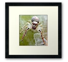 Don't Stare Framed Print