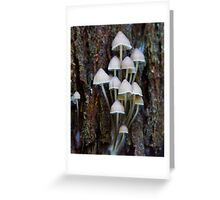 Fungus in the forest 5 Greeting Card