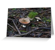 Fungus in the forest 17 Greeting Card