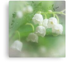 Fragrant beauty Canvas Print