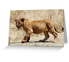 African Lion Cub After Feeding, Serengeti, Tanzania  Greeting Card