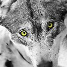 eyes of a wolf by neil harrison