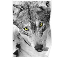 eyes of a wolf Poster