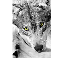 eyes of a wolf Photographic Print