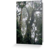 2000 Years - Springbrook Mountain, Gold Coast Hinterland Greeting Card