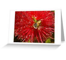 bottle brush flower Greeting Card