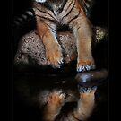 reflection by ArtX