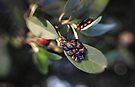 A Whole Lotta Bugs by yolanda